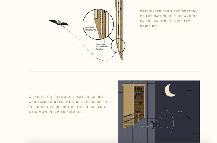 How a bat house works.