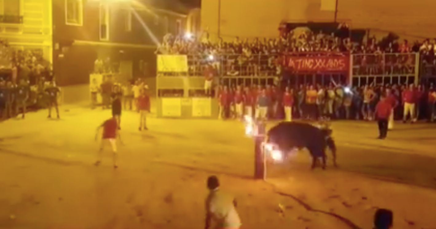Graphic Video Shows Bull Killing Itself After Horns Are Set