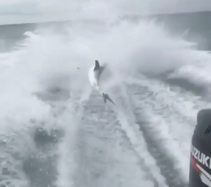 A shark is seen being dragged by a speed boat