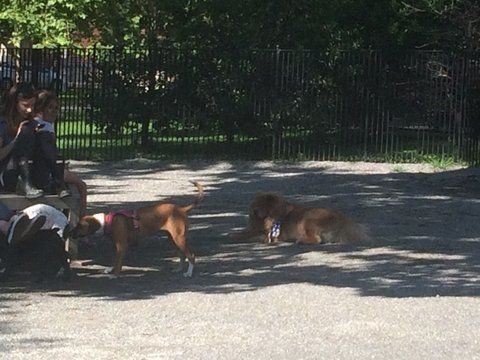 The dog park: whether urban or suburban, there are more