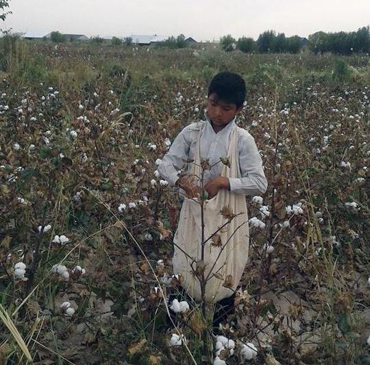 13-year-old boy picking cotton in a World Bank project area, Ellikkala, Karakalpakstan, under orders from his school during t