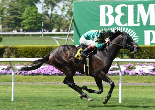 Gold Shield winning an allowance optional claiming at Belmont, 5/12/2016