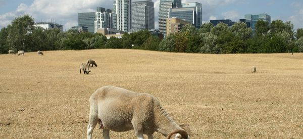 7 Reasons Why Your Kids Will Love Visiting A City Farm