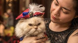The Algonquin Hotel's Cat Fashion Show Is Paw-sitively