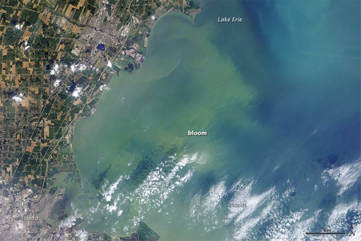 Residents of Toledo, Ohio were unable to use tap water for three days in August 2014 after this harmful algae bloom on Lake E