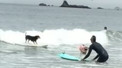 Salty Dogs Hang Ten In Gnarly Annual Surfing
