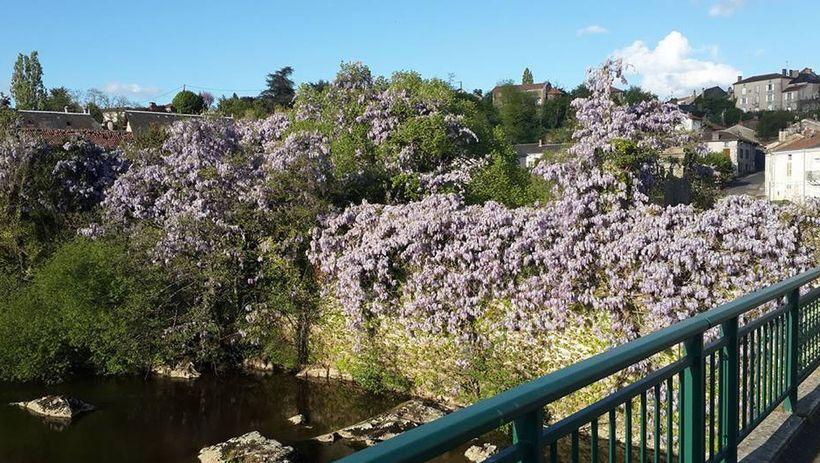 """<em>""""Overgrown wisteria and vegetation...""""</em>"""