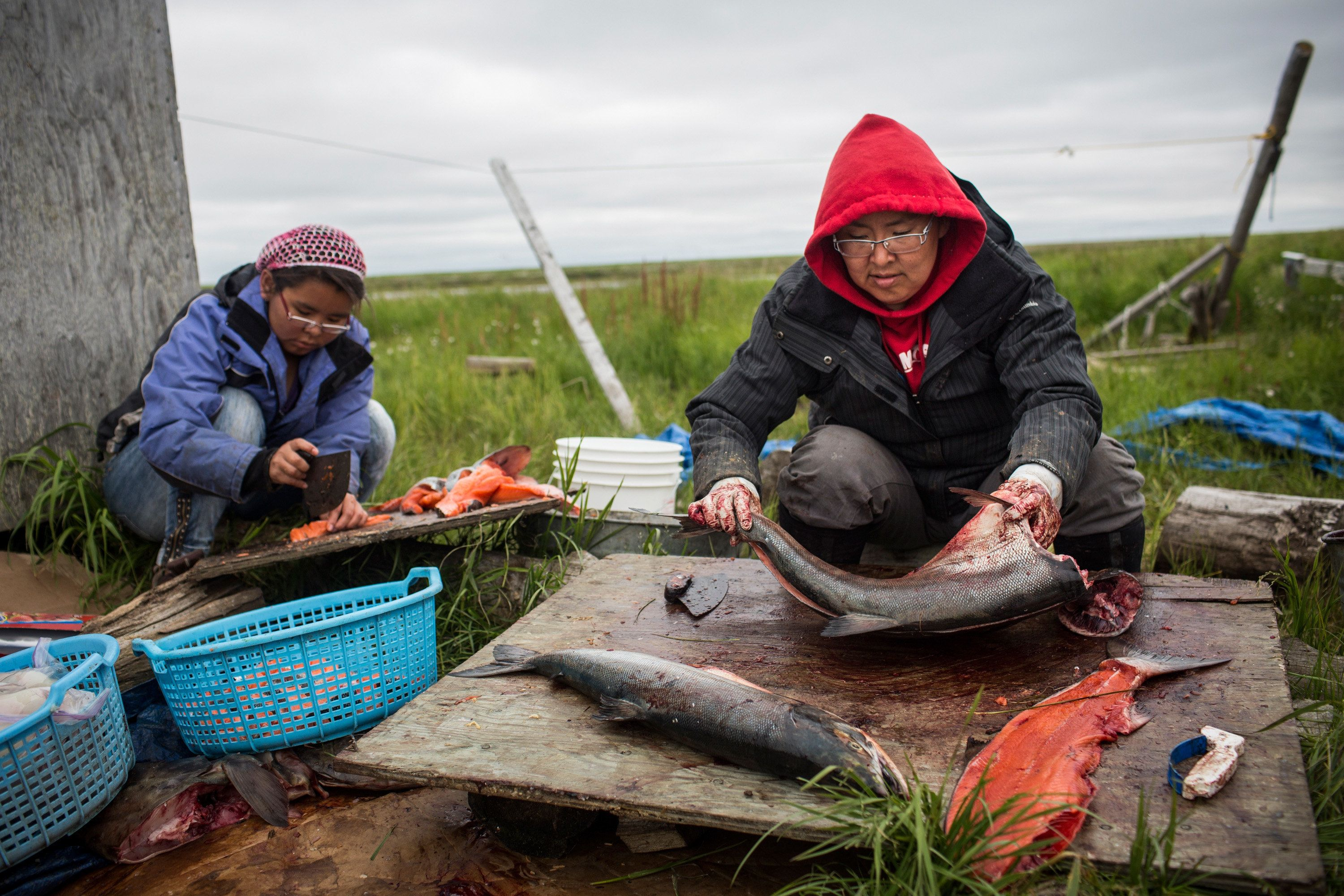 NEWTOK, AK - JUNE 30:  Yupik women prepare freshly caught salmon for curing on June 30, 2015 in Newtok, Alaska. Newtok, which has a population of approximately of 375 ethnically Yupik people, was established along the shores of the Ninglick River, near where the river empties into the Bering Sea, by the Bureau of Indian Affairs (BIA) in 1959. The Yupik people have lived on the coastal lands along the Bering Sea for thousands of years. However, as global temperatures rise the village is being threatened by the melting of permafrost; greater ice and snow melt - which is causing the Ninglick river to widen and erode the river bank; and larger storms that come in from the Bering Sea, which further erodes the land. According to the U.S. Army Corp of Engineers, the high point in Newtok - the school - could be underwater by 2017. A new village, approximately nine miles away titled Mertarvik, has been established, though so far families have been slow to relocate to the new village.   (Photo by Andrew Burton/Getty Images)