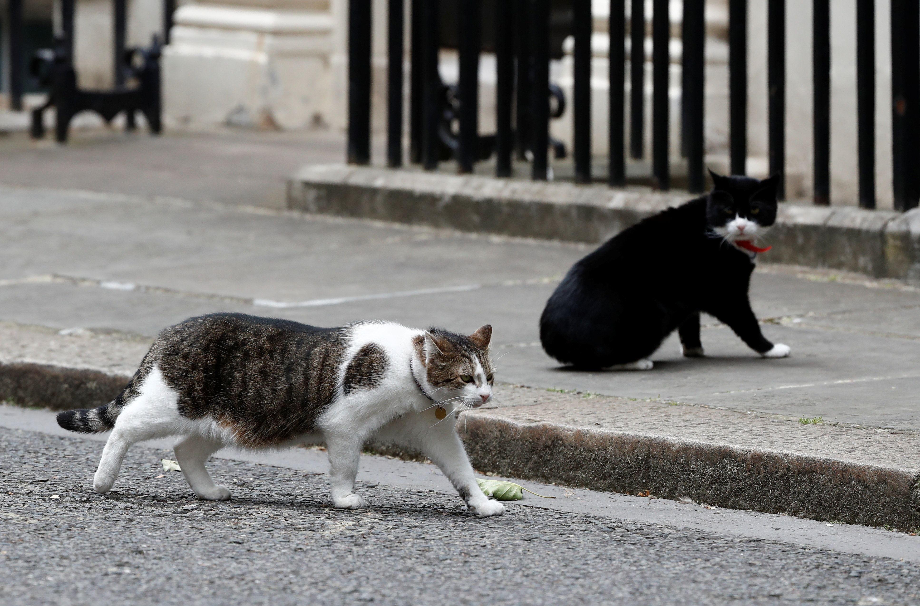 We Ranked The Westminster Cats On Their Twitter