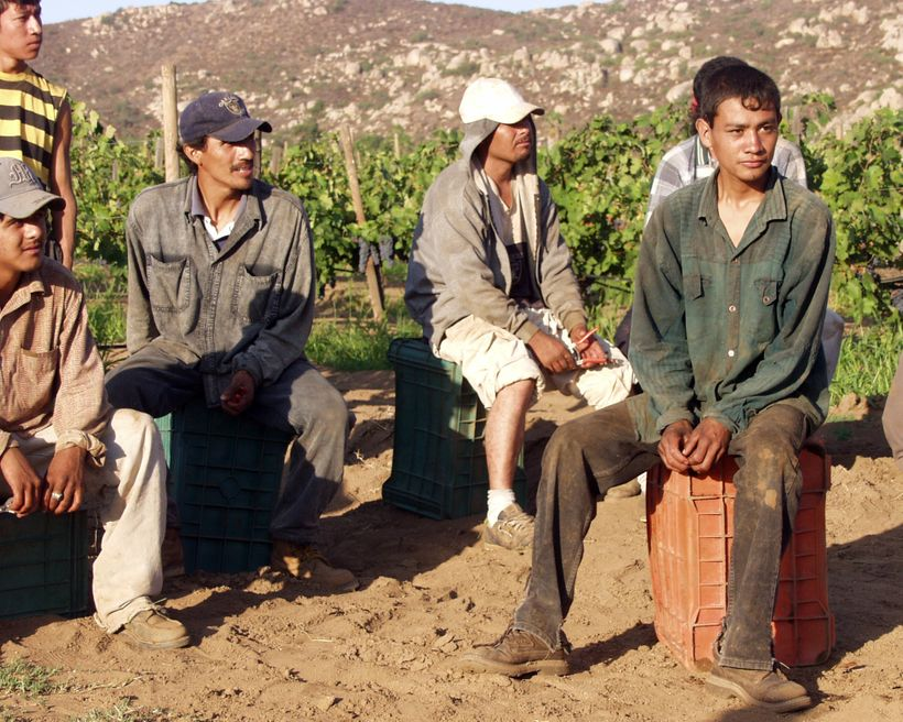NAFTA has forced small-scale farmers to leave their land and become migrant workers struggling to make a livelihood. These gr