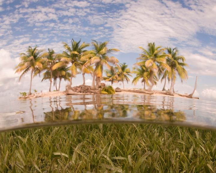 An idyllic tropical island sits amidst a seagrass bed on Turneffe Atoll, Belize, Caribbean, Atlantic Ocean. © Ethan Daniels