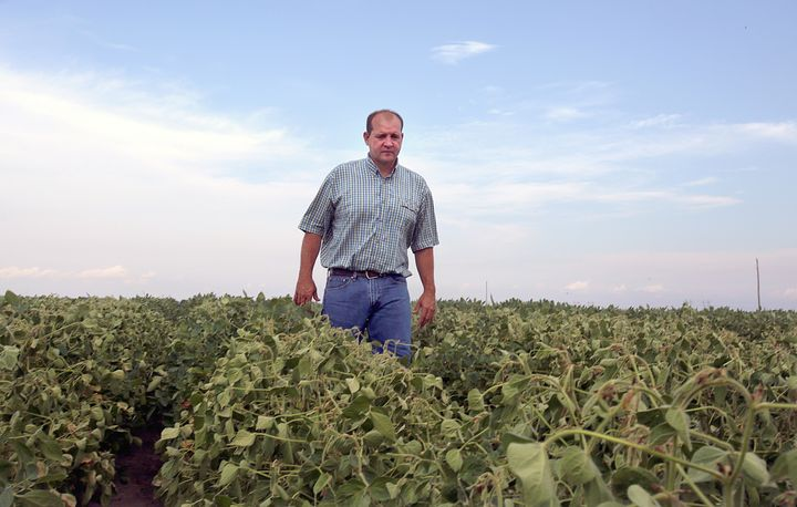 John Weiss looks over his crop of soybeans, which he had reported to the state board for showing signs of damage due to the d