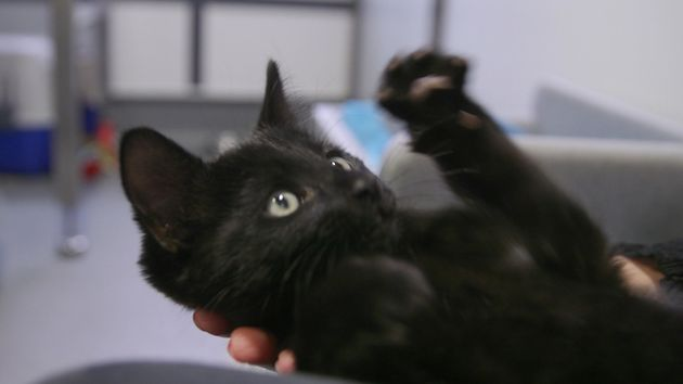 Paulie, pictured, was offered a forever home one day after the