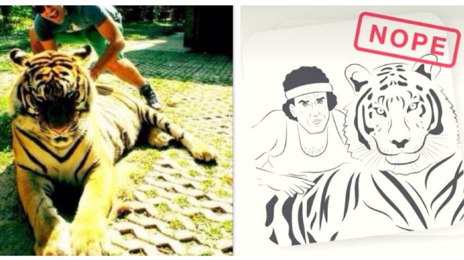 tiger dating site- ul)
