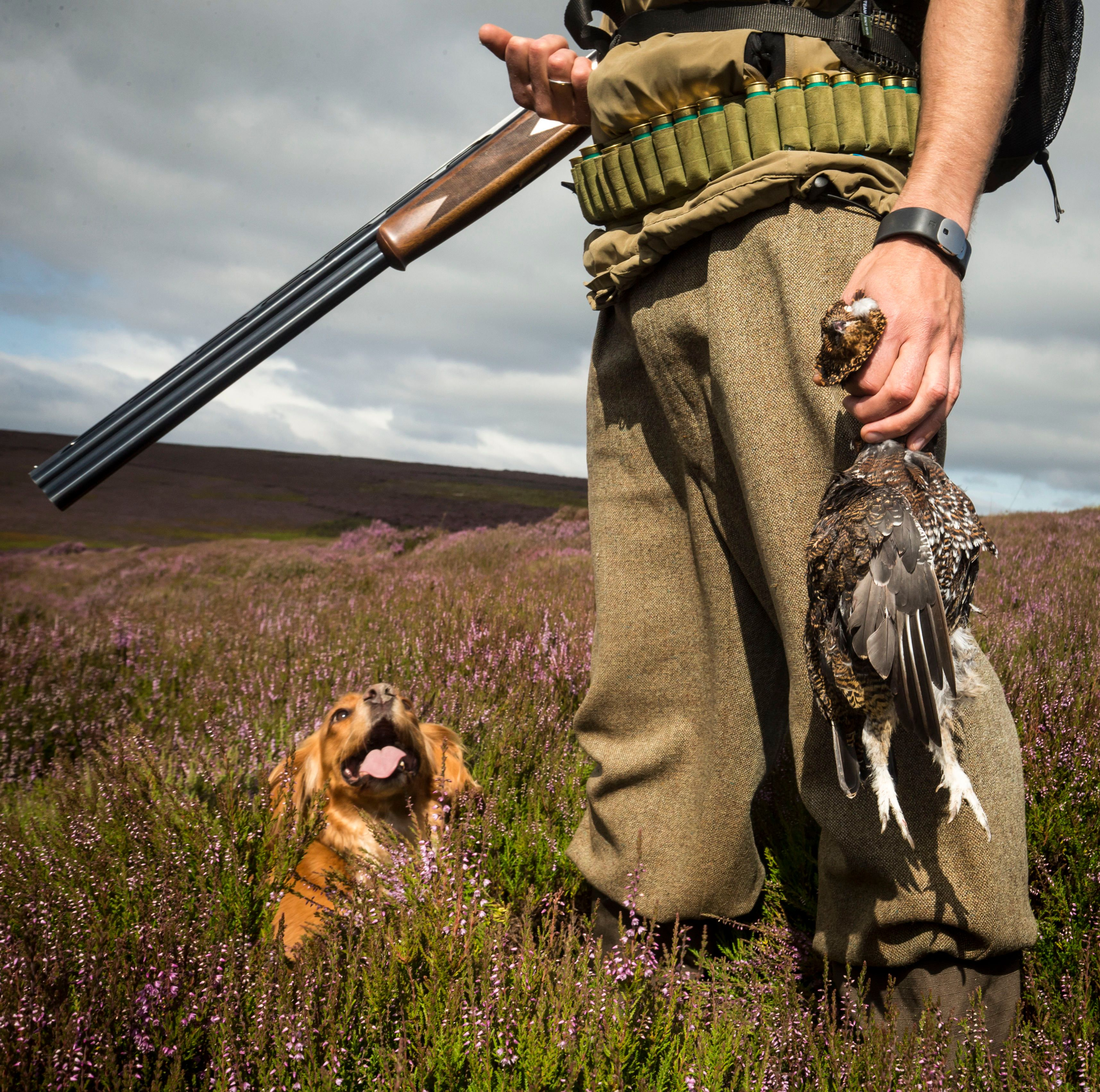 Glorious Twelfth: Critics Slam Grouse Moors For Pocketing Millions In EU