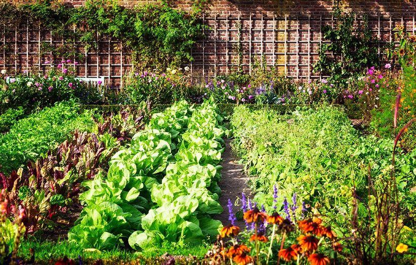 Image result for kate middleton vegetable garden