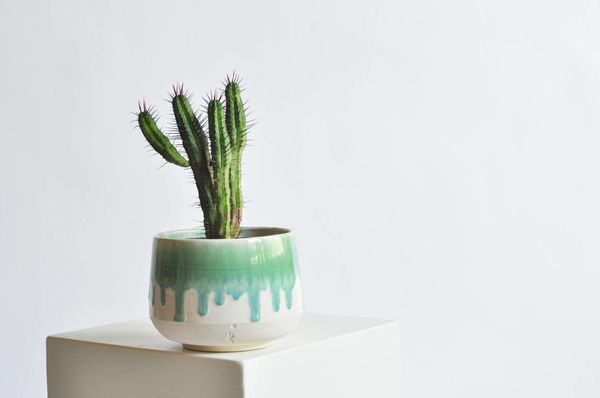 "You already know how we feel about <a href=""http://www.huffingtonpost.com/entry/unique-succulent-planters_us_59667022e4b0d51c"