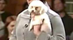 Judge Judy Lets Dog Loose In Court To Prove Who Owns
