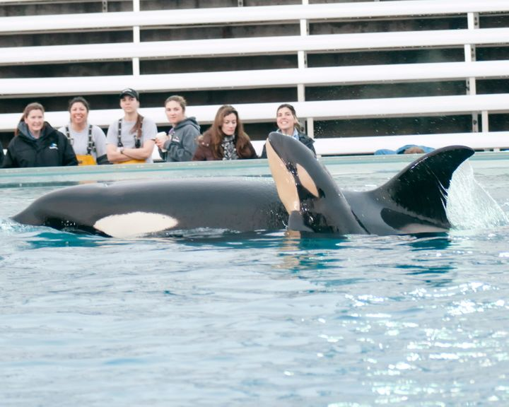 SeaWorld's zoological team watches Kasatka and one of her calves in 2013 in San Diego.
