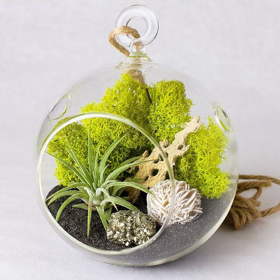 "These are easy and fun to assemble gifts that will impress any greenery lover! Shop it <a href=""https://www.etsy.com/listing/"