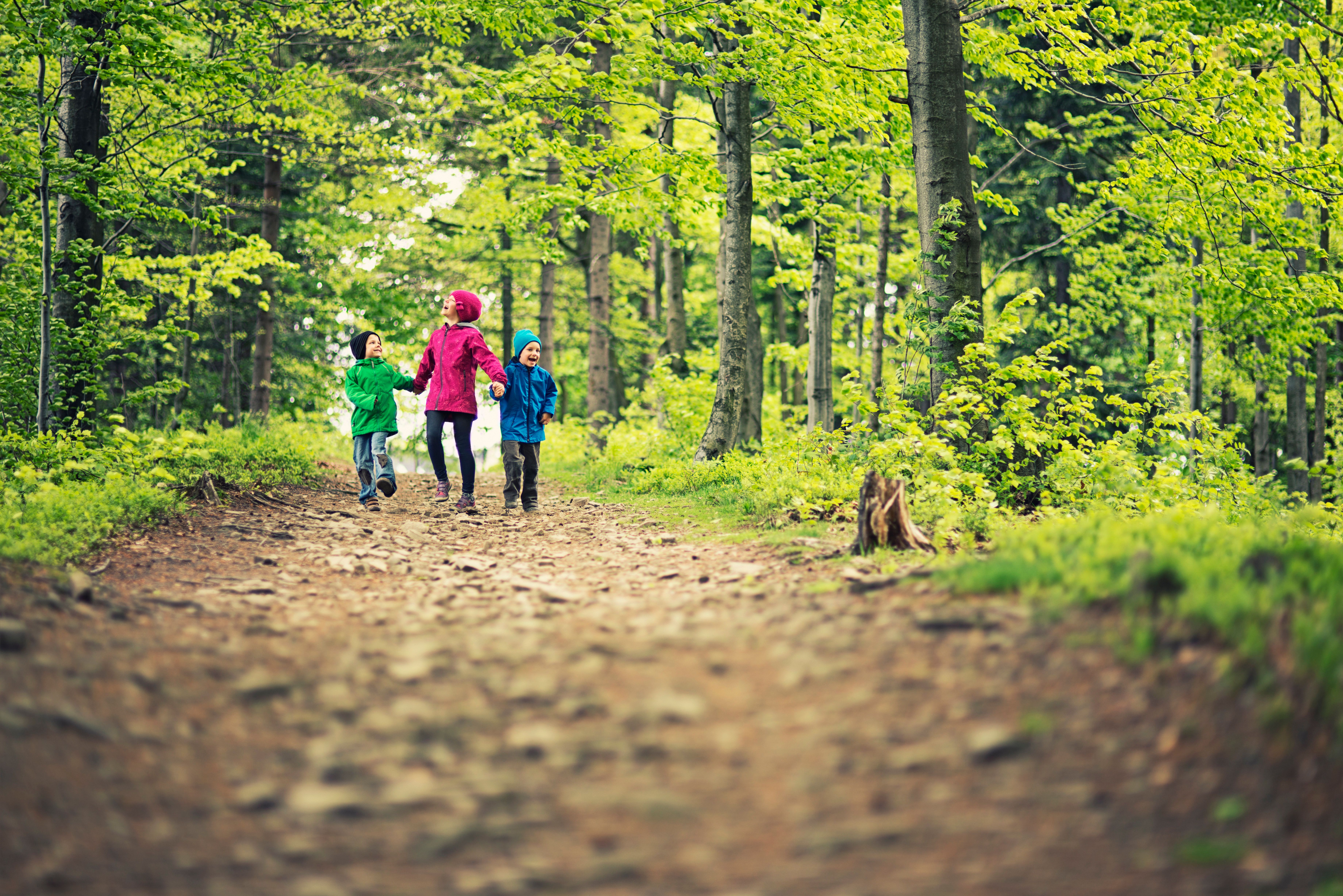 Three kids hiking through a spring forest, jumping and laughing. Kids wearing colorful jackets are holding hands and walking along dirt path surrounded by fresh green leaves.