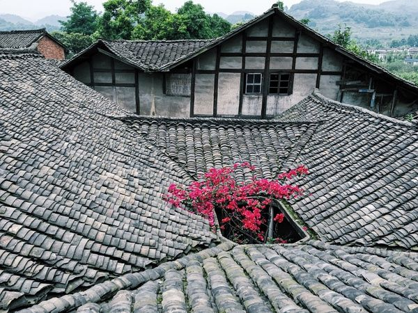 Mt. Emei, Sichuan, China