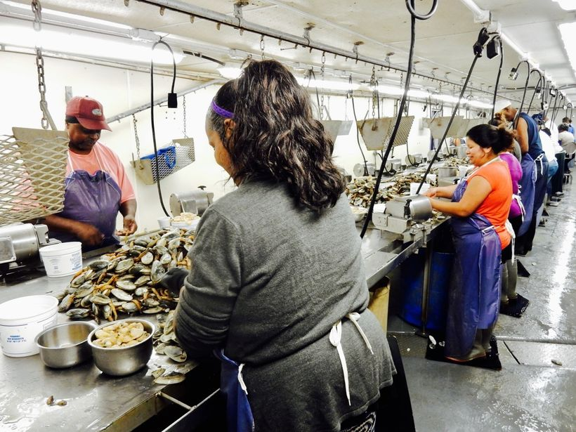 Clam shuckers, Harris Seafood MD