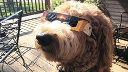 Dogs Wearing Solar Eclipse Glasses Show Donald Trump How It's