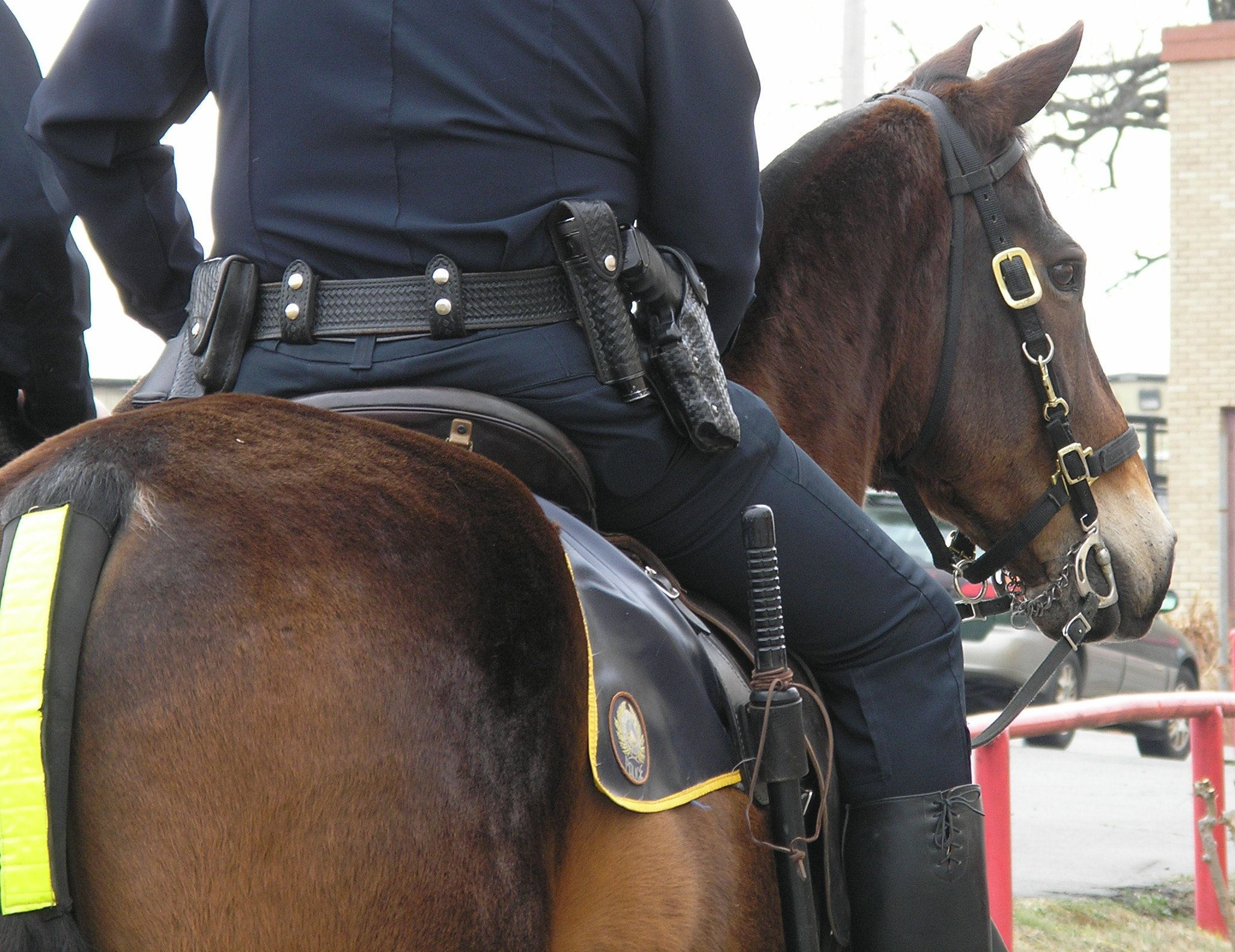 Mounted Police and his horse