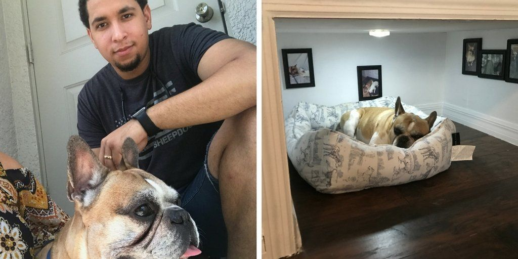 This Man Built His Dog A Room & It's Probably Nicer Than Your