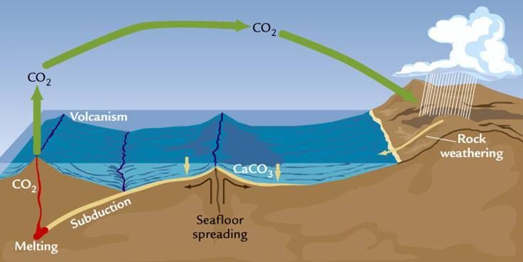 Weathering removes CO2 from the atmosphere and delivers it to the ocean, where it combines with calcium to form limestone. Li