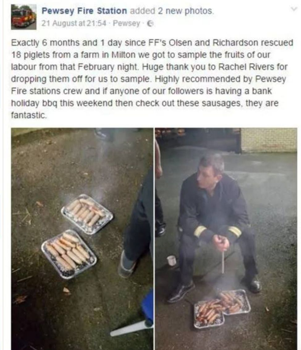 Piglets saved from blaze served as sausages to firefighters who rescued them