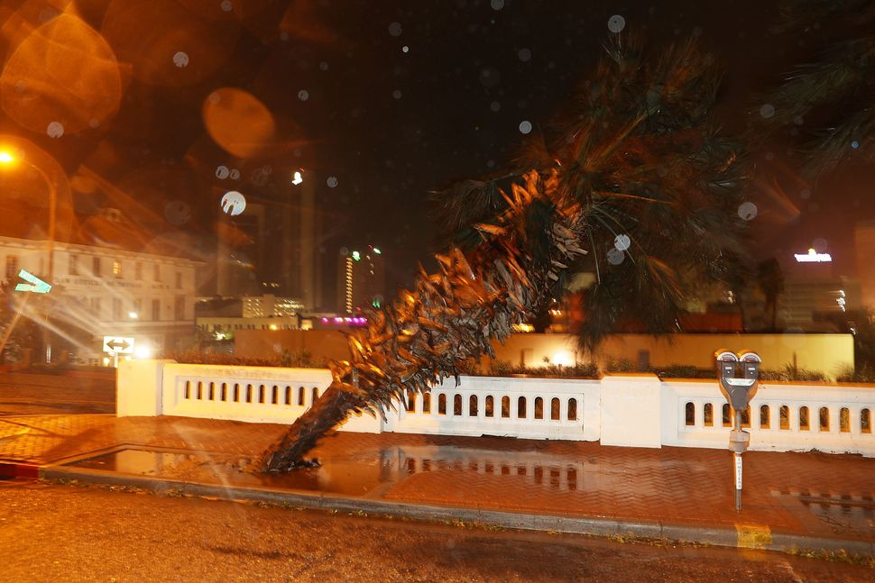 A tree is seen knocked sideways in Corpus Christi.
