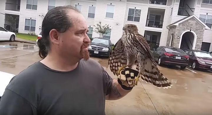 A hawk perches on William Bruso's gloved hand after refusing to fly away.
