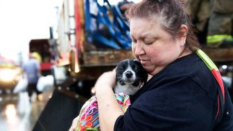 HOUSTON, TX - AUGUST 27 2017:  Elma Moreno comforts her dog, Simon as they are loaded on to a trucks after being evacuated from their flooded apartment. Tropical Storm Harvey is causing major flooding throughout Houston and Southeast Texas.  (Photo by Robert Gauthier/Los Angeles Times via Getty Images)