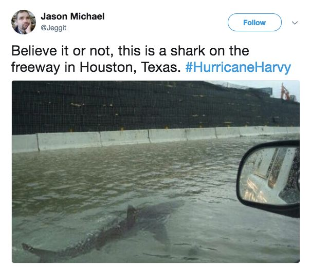 No, There's Not A Shark Swimming On The Freeway In