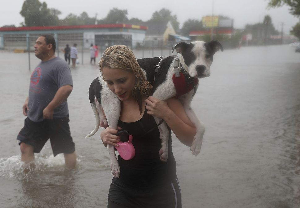 Naomi Coto carries Simba on her shoulders as they evacuate their home in Houston.