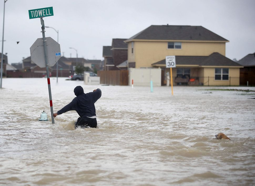 A person, followed by a dog, walks through a flooded street in Houston.