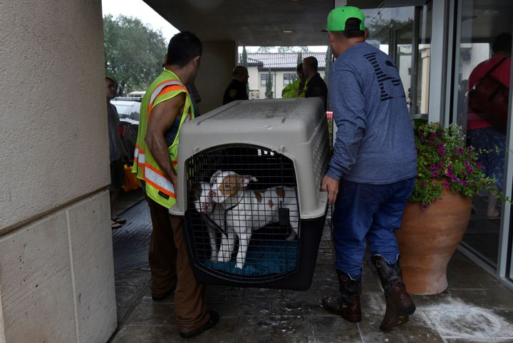 Rescued dogs are taken to an evacuation center in Bellaire, a city within the Houston metropolitan area.