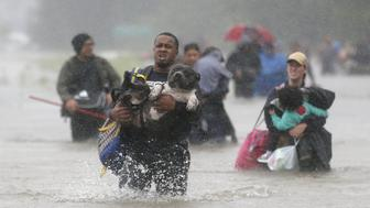 Isiah Courtney carries his dog Bruce through flood waters from Tropical Storm Harvey in Beaumont Place, Houston, Texas, U.S., on August 28, 2017. REUTERS/Jonathan Bachman