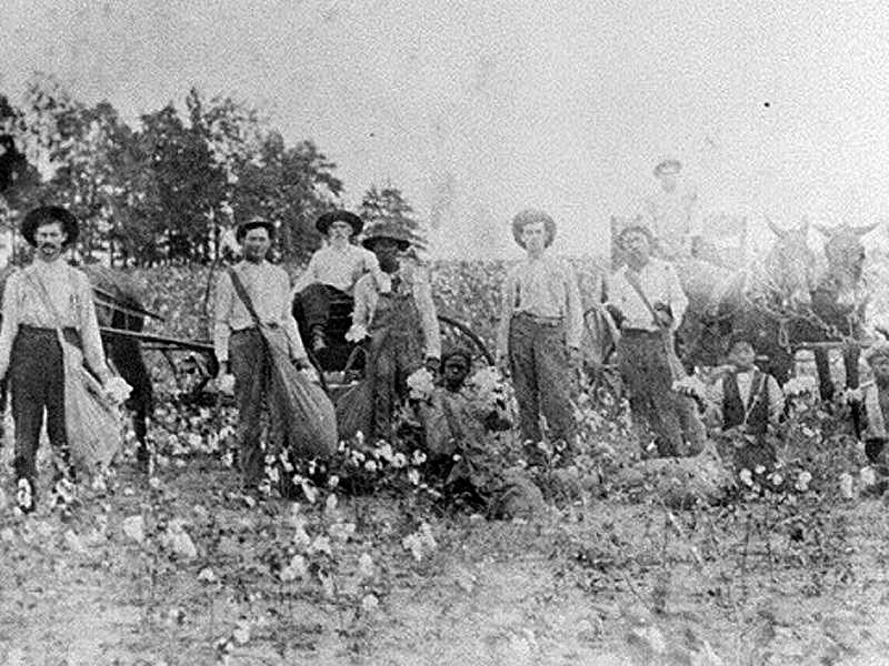 Sharecroppers — Black and white — harvesting cotton in Randolph County, Georgia, 1910.
