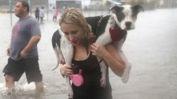10 Extraordinary Animal Rescues In The Aftermath Of Hurricane