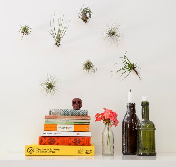 """<a href=""""https://www.etsy.com/listing/203330112/air-plant-holder-brass-5-piece-wall?ga_order=most_relevant&ga_search_type"""