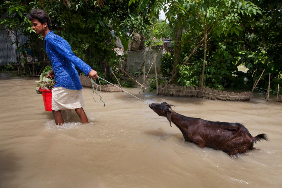A man crosses through floodwater with his goat near a river in Dohar, Nawabganj, on Aug. 19.