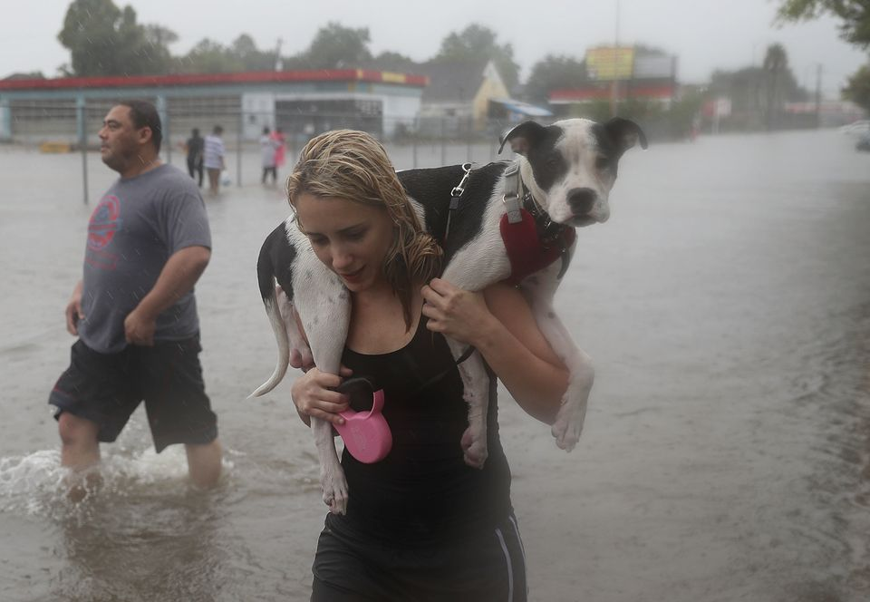 HOUSTON, TX - AUGUST 27:  Naomi Coto carries Simba on her shoulders as they evacuate their home after the area was inundated