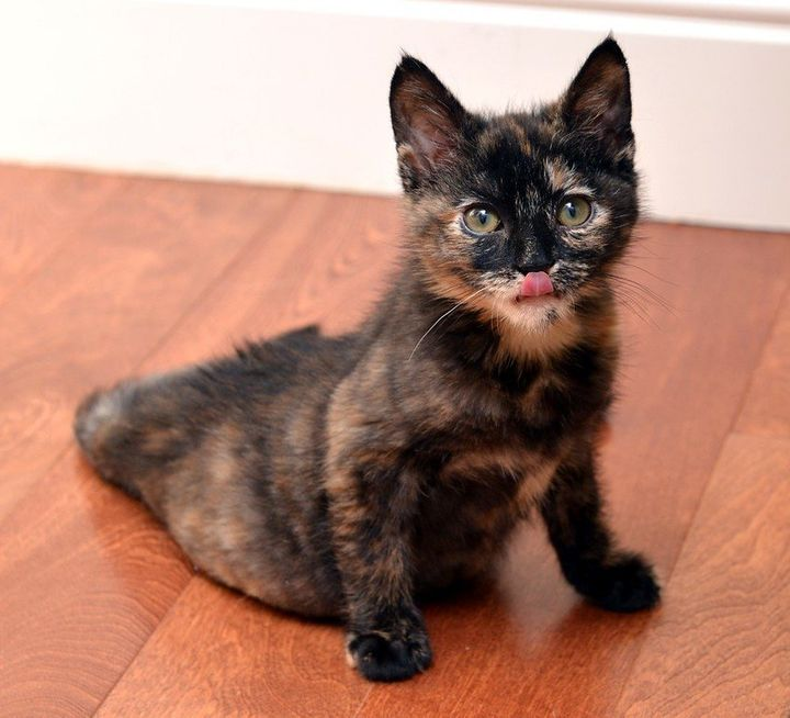 <i>Stockton is a tortie who was born with paralysis in her lower body.</i>