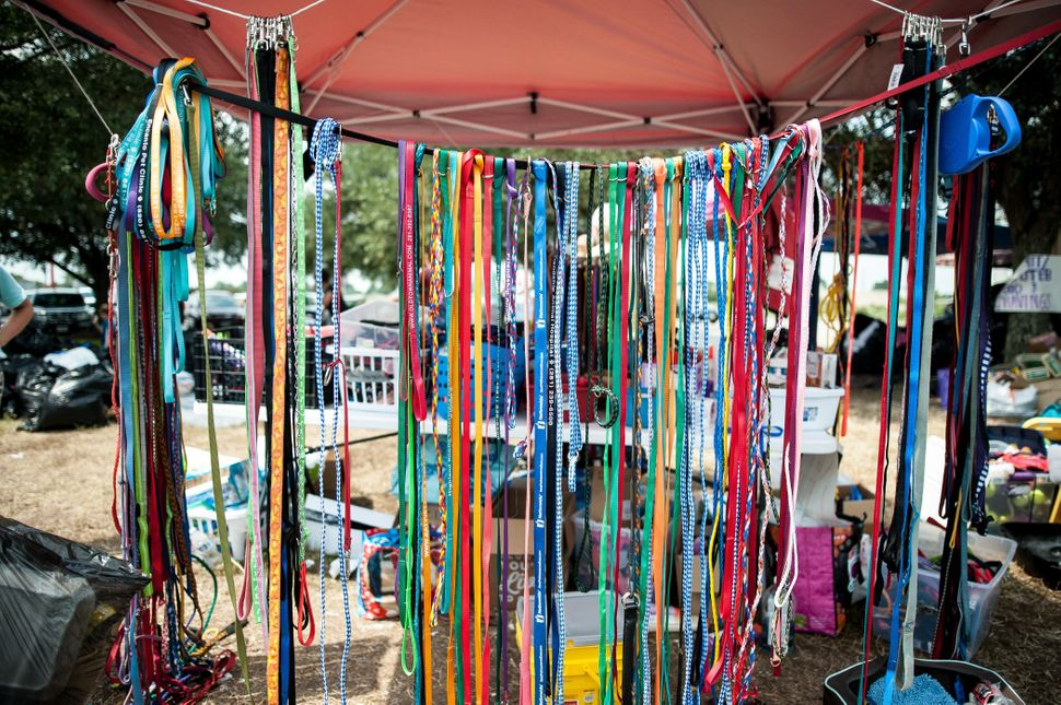 Donated leashes in Katy, Texas, on Sunday.