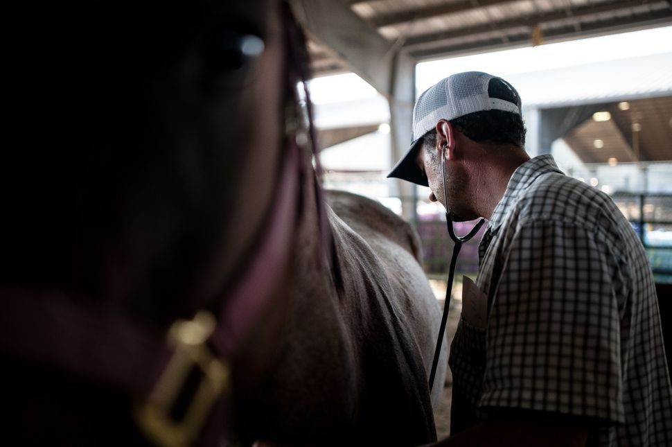 Dr. Nick Moore, of Georgetown, Texas, checks up on a horse at Ford Park.