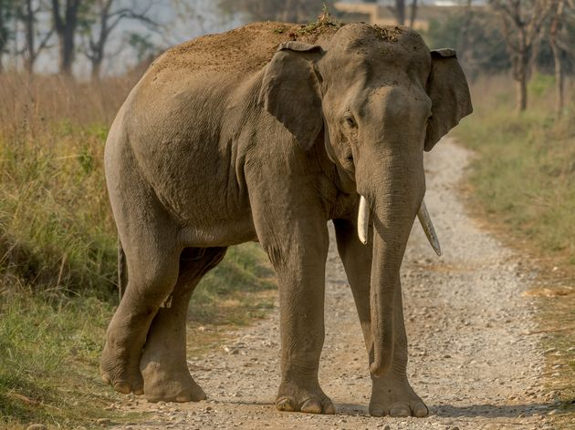 A man has been crushed to death after trying to take a selfie with an elephant in India. File