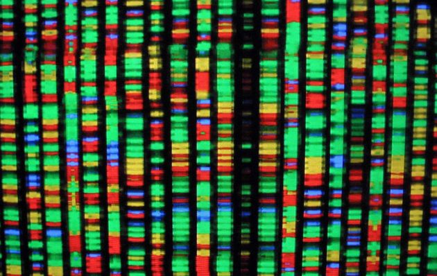 A digital representation of the human genome at the American Museum of Natural History in New York
